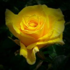 In memory of my granny