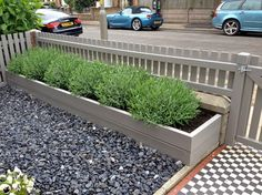 Stone coloured wood planter and picket fence with large lavender plants