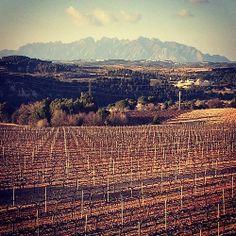 Vinyes mirant a #Montserrat des de #Gelida #Penedes