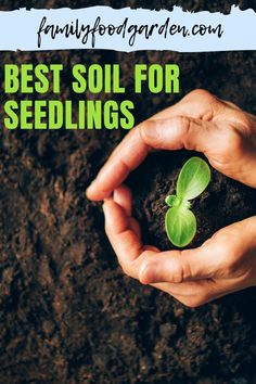 Sharing with you the best soil for seedlings. There are hundreds of methods and types of soil that are designed to get your seedlings growing. We have whittled down the long list of seed-soil in order to help make your decision a little easier. Check this pin! #bestsoil #seedling #gardening Regrow Vegetables, Container Gardening Vegetables, Vegetable Gardening, Beef Recipes, Cooking Recipes, Types Of Soil, Whittling, Kitchen Recipes, Easy Cooking