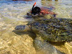 Turtle, Hikkaduwa, Sri Lanka (www.secretlanka.com)