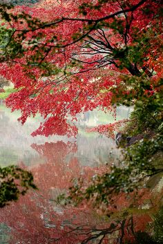 Autumn leaves in Yakushiike Park, Machida, Tokyo, Japan  (by Satoshi Kawase on Flickr)