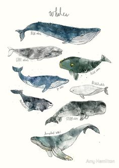 """Whales"" Canvas Prints by Amy Hamilton 