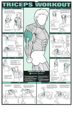 Andi Fauzi Firdaus: Poster Fitness Pria - Triceps Workout (HD Quality)...