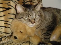 Max, napping with his buddy.