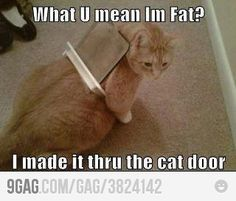 @Pat Huston This is what I keep imagining I will come home to once our kitty door is installed.