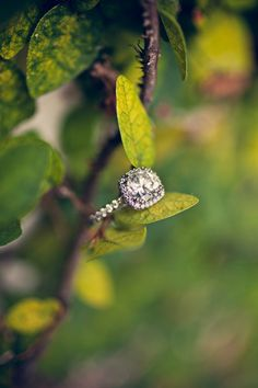 This ring is as lovely as the bride who now wears it! The wedding featured on SMP Florida is spectacular! http://stylemepretty.com/florida-weddings/2012/03/26/weston-hills-country-club-wedding-by-teran-photography/ Photography by teranphotography.com