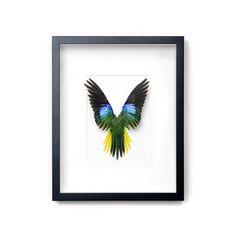 Pheromone: Reclaimed Parakeet  A bit macabre, but beautiful nonetheless.