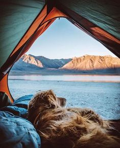 Four-legged tent mate. :) Photo by: @canevariphoto