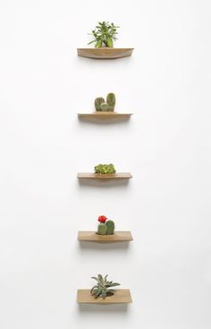 wall mounted plants♡ (love the idea! Not necessarily w plants though)