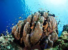 Australia created world's largest network of marine reserves. Happy sharks= #FinSanity