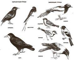 Зимующие и перелетные птицы картинки с названиями для детей