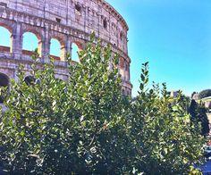#colosseo #roma #rome #amazing #beautiful #italia #italy #travel #travelling #travels # colisseum