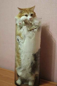 - LOLcats is the best place to find and submit funny cat memes and other silly cat materials to share with the world. We find the funny cats that make you LOL so that you don't have to. Funny Animal Memes, Cute Funny Animals, Funny Animal Pictures, Cat Memes, Funny Cute, Cute Cats, Funny Humor, Funny Pics, Super Funny