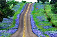 Texas_Spring