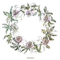 Этот цветок рос у нас 3 года на даче. На зимовку его нужно обрезать и ставить в прохладное (13-16°) помещение, то есть увозить в город. А весной, прямо в огромном горшке, закапывать обратно в землю. Довольно хлопотно это, но цветы пахнут и выглядят потрясающе #wreath #pasiflora #botanical #botanicalillustration #illustration #watercolor #waterblog #aquarelle #flowersinspiration