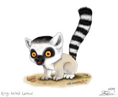 Ring-tailed Lemur by capsicum