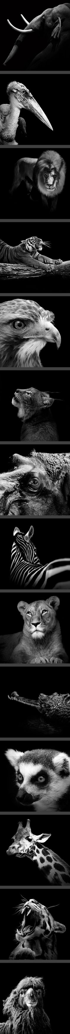 Portraits of Animals by Lukas Holas