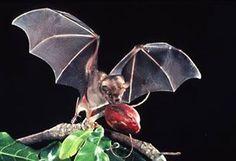 photo, bat with fruit