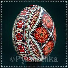 Real Ukrainian Pysanky. Chicken Pysanka. Roman.