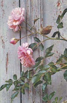 """Artist Carl Brenders """"Summer Roses Winter Wren"""" ..original pinner writes... """"He is a fantastic wildlife artist!"""""""