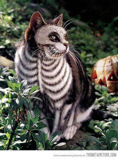 Tim Burton's cat…