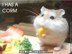 A new meme, entitled 'lil hamster' has been published at http://slapcaption.com/lil-hamster/ under the WTF category - http://fbposttrader.com - Caption Your Own Photos