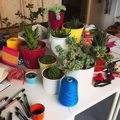 Still life of the cari + carl studio succulent collection set up for a play-day of drawing!