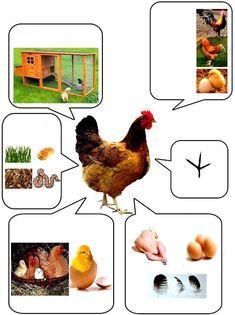 Animal Activities For Kids, Montessori Activities, Math For Kids, Science Activities, Preschool Activities, Farm Animals, Animals And Pets, Shapes For Kids, Preschool Classroom
