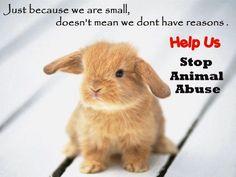 Animals matter! Big or small.