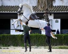 The Andalusian or The Spanish Dancer horse