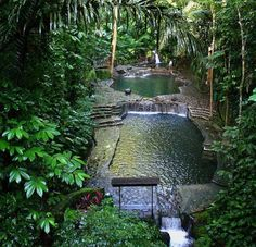 Amazing Jungle Pool