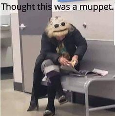 Remember the muppets? I hope so! Funny Shit, Haha Funny, Funny Cute, Funny Stuff, Random Stuff, Memes Humor, Sober, Funny Relatable Memes, Funny Jokes