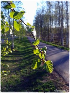 spring in Finland