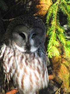 Matkojeni blogi: Vain pöllöjä! Pöllöt ovat siktä mitltä näyttävät, mitä, Kansankoti 24.02.2016 Camera Obscura, Rocky Horror, Culture Travel, Ecology, Gotham, Travel Photos, Owl, Bird, Animals