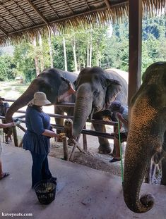 Elephant Hills in Khao Sok National Park. Elephant tourism in Thailand is booming but not all of it is ethical or sustainable. Learn how to select an ethical elephant experience, and read about our stay at Elephant Hills.