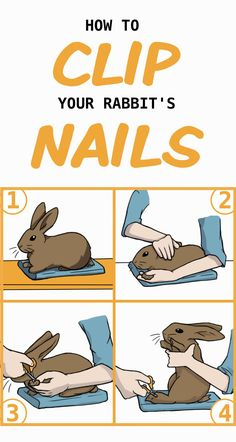 Place your rabbit on a table; gently pull one of their forepaws out; Clip the nails on that foot; Hold your rabbit up on their hind legs and clip their back feet. Pet Bunny Rabbits, Lop Bunnies, Cute Baby Bunnies, Rabbit Toys, Pet Rabbit, Rabbit Diet, Bunny Care Tips, Bunny Supplies, Bunny Room