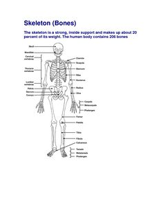 nursing skeleton answer A pt has sustained a closed fx and has just had a cast applied to the affected arm the pt is complaining of intense pain the nurse has elevated the limb, applied an ice bag, and administered an analgesic, which was ineffective in relieving the pain.
