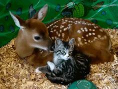 Katze und Reh .....