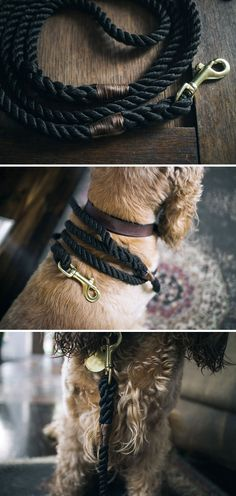 This leash is made to last.