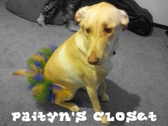 Mardi Gras puppy dog tutu up to 7 inches by PaitynsCloset on Etsy, $18.00
