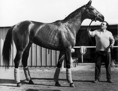 Buckpasser His Son Silver Buck Sired Silver Charm Who Was Going For The Triple Crown When Ran Down By Touch Gold Whose Dam Was Passing Mood, A Daughter Of Buckpasser.