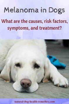 Pin By Dog Lovers Hub On Dog Lovers Hub Dog Cancer Dog