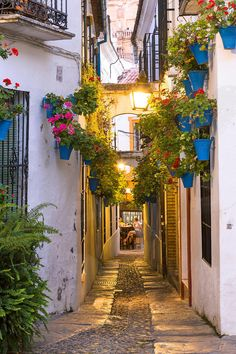 A Lane in Calleja de las Flores, Cordoba, Spain, with Blue Hanging Baskets ....