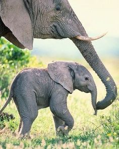 African Elephant Cow and Calf, Amboseli National Park, Kenya Art Wolfe Stock Photography . Photo Elephant, Elephant Love, Small Elephant, Geometric Elephant, Mom And Baby Elephant, Mandala Elephant, Happy Elephant, Elephants Photos, Save The Elephants