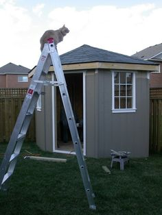 Want to know about corner sheds? Then this is without doubt the right place!