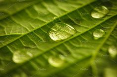 Green leaf with waterdrops by oksix on @creativemarket