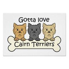 Three Cairn Terriers Print