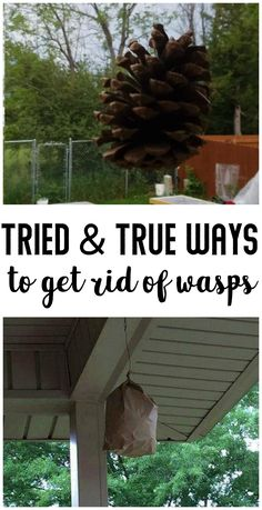 3 Ways to Get Rid of Wasps- Natural, chemical free ways to get rid of wasps from being on your property. Outdoor Projects, Garden Projects, Get Rid Of Wasps, Before After Hair, Bug Off, Mosquito Repelling Plants, Pest Control, Animals Beautiful, Good To Know