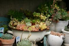 Planting of succulent home: small handmade garden